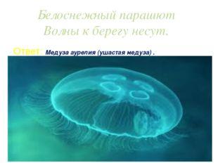 Белоснежный парашют Волны к берегу несут. Ответ: Медуза аурелия (ушастая меду