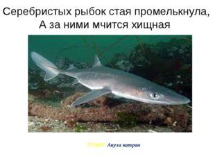 Серебристых рыбок стая промелькнула, А за ними мчится хищная Ответ: Акула кат