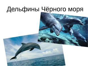 Дельфины Чёрного моря