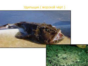 Удильщик ( морской чёрт )