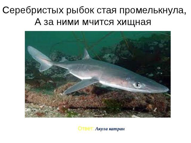 Серебристых рыбок стая промелькнула, А за ними мчится хищная Ответ: Акула кат...