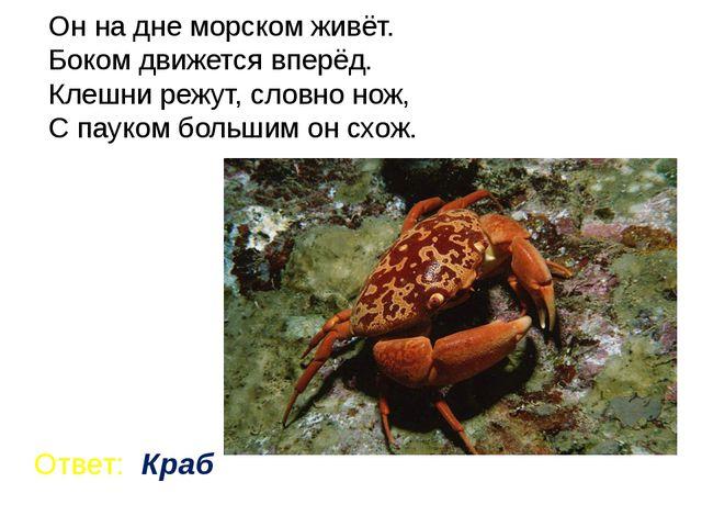 Он на дне морском живёт. Боком движется вперёд. Клешни режут, словно нож, С п...