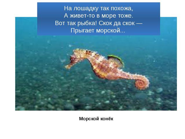 На лошадку так похожа, А живет-то в море тоже. Вот так рыбка! Скок да скок —...