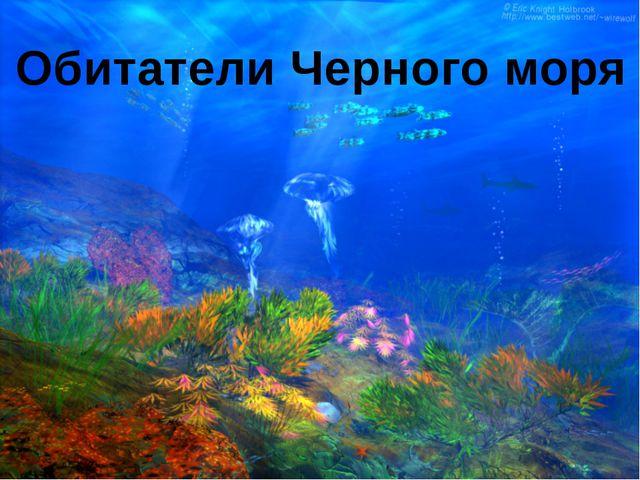 Обитатели Черного моря
