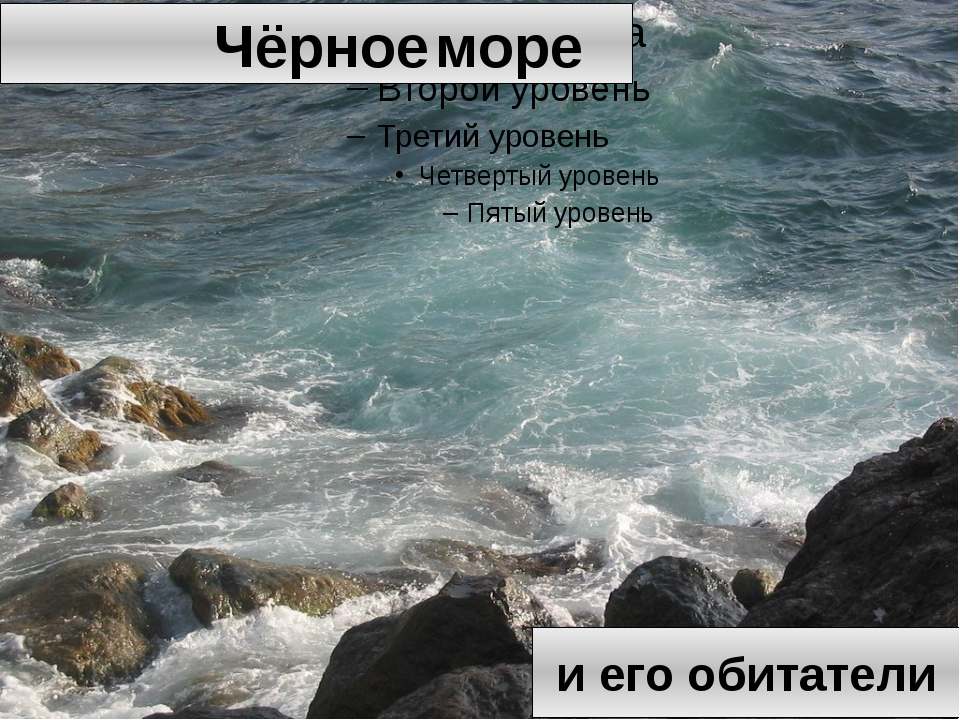 Чёрное море и его обитатели
