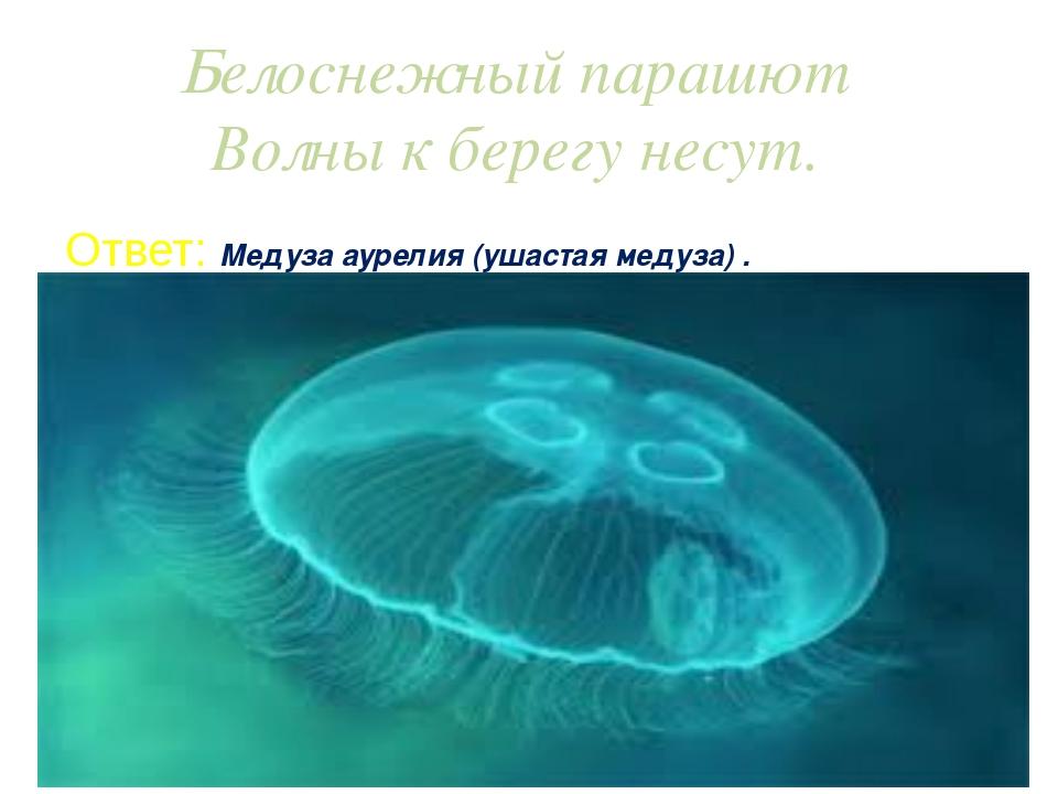 Белоснежный парашют Волны к берегу несут. Ответ: Медуза аурелия (ушастая меду...