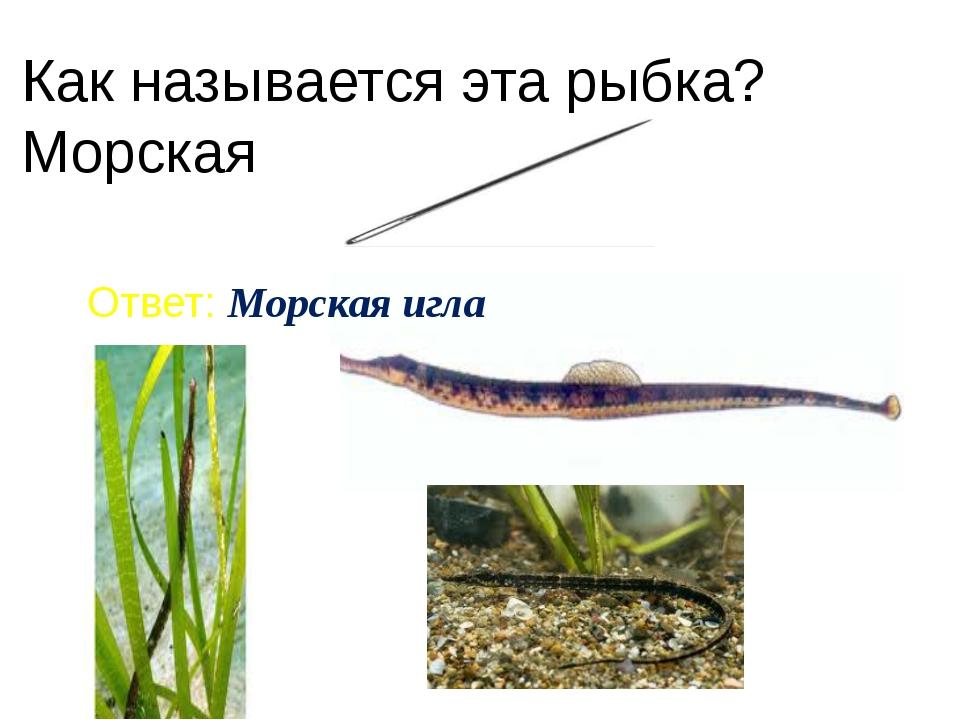 Как называется эта рыбка? Морская Ответ: Морская игла