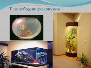 Разнообразие аквариумов