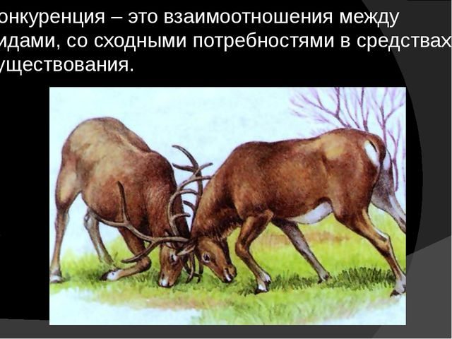 Конкуренция – это взаимоотношения между видами, со сходными потребностями в с...