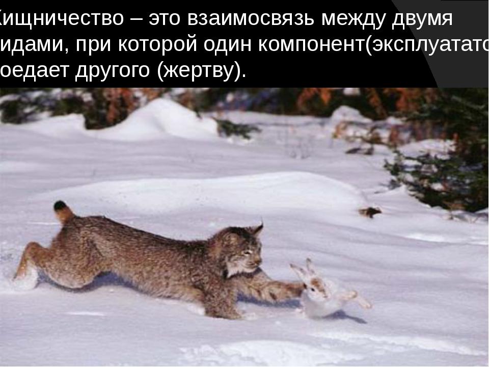 Хищничество – это взаимосвязь между двумя видами, при которой один компонент(...