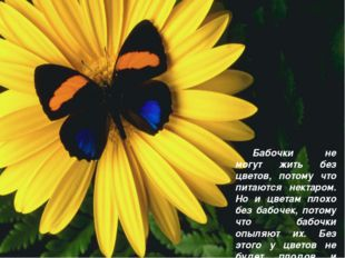 Бабочки не могут жить без цветов, потому что питаются нектаром. Но и цветам