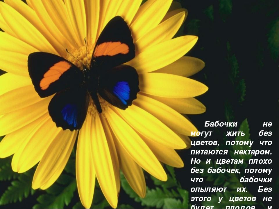 Бабочки не могут жить без цветов, потому что питаются нектаром. Но и цветам...
