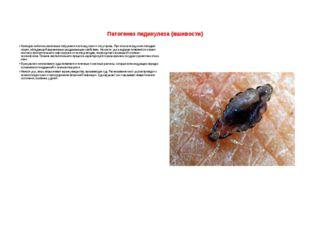 Патогенез педикулеза (вшивости)  Колющим хоботком насекомые погружаются в то