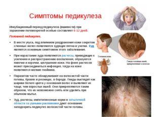 Симптомы педикулеза Инкубационный период педикулеза (вшивости) при заражении