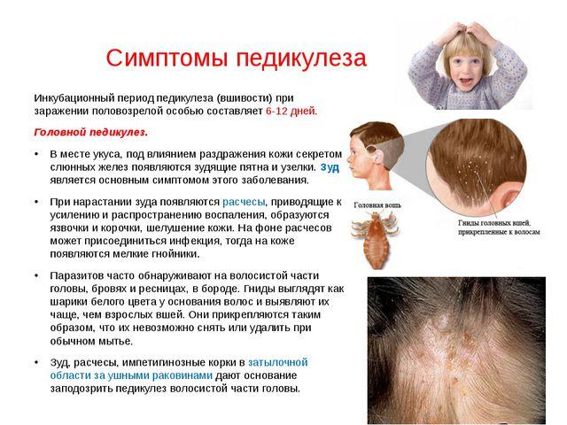 Симптомы педикулеза Инкубационный период педикулеза (вшивости) при заражении...