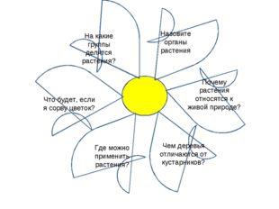 На какие группы делятся растения? Назовите органы растения Почему растения от