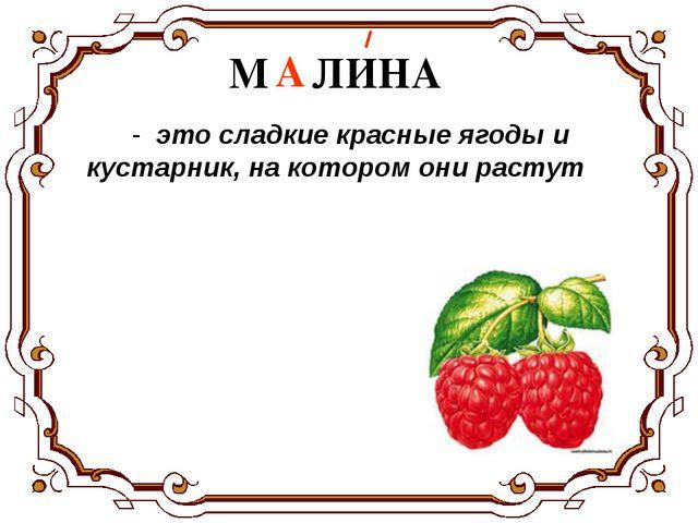 - это сладкие красные ягоды и кустарник, на котором они растут М…ЛИНА А