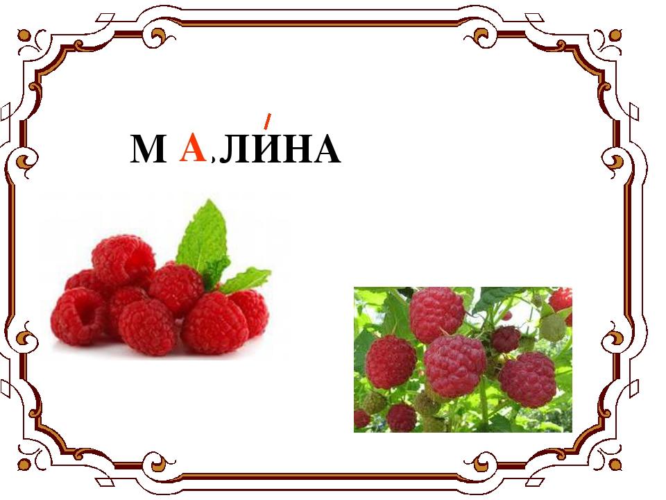 М …ЛИНА А