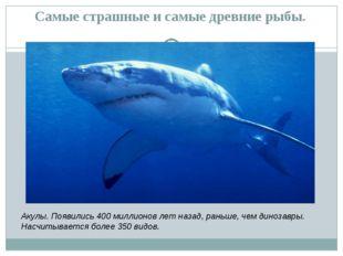Самые страшные и самые древние рыбы. Акулы. Появились 400 миллионов лет назад