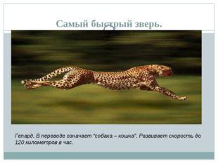 """Самый быстрый зверь. Гепард. В переводе означает """"собака – кошка"""". Развивает"""