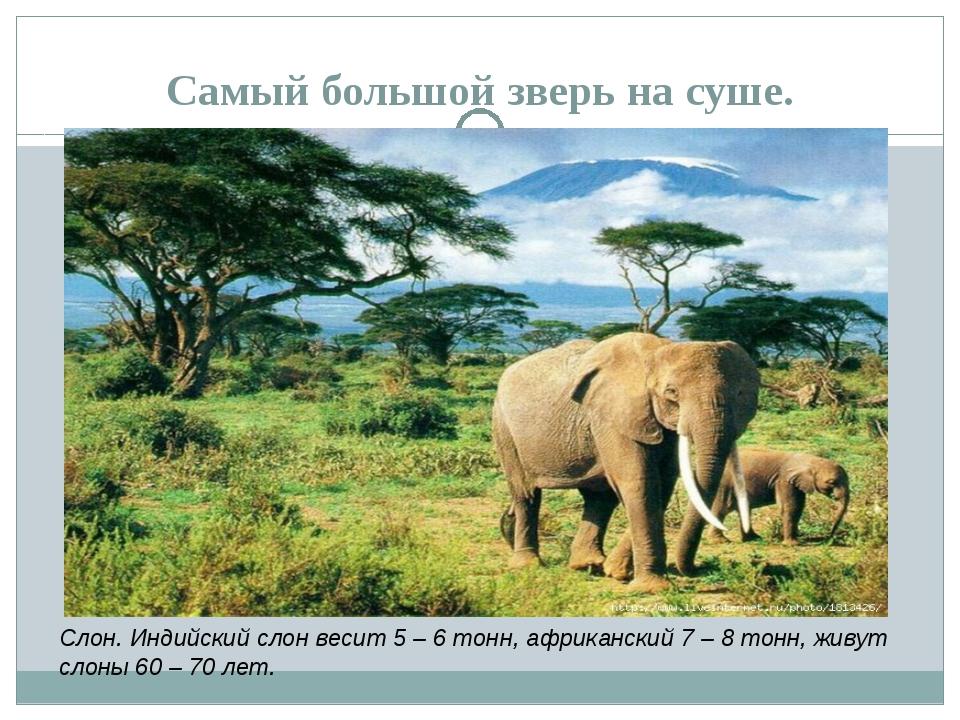 Самый большой зверь на суше. Слон. Индийский слон весит 5 – 6 тонн, африканск...