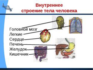 Внутреннее строение тела человека Головной мозг Легкие Сердце Печень Желудок