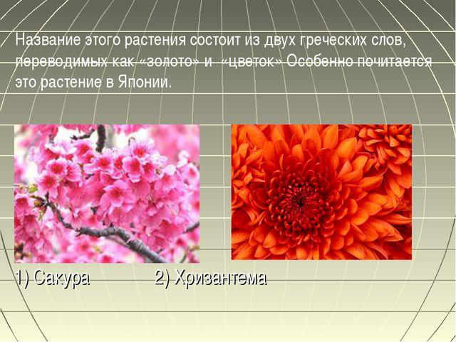 1) Сакура 2) Хризантема Название этого растения состоит из двух греческих сл...