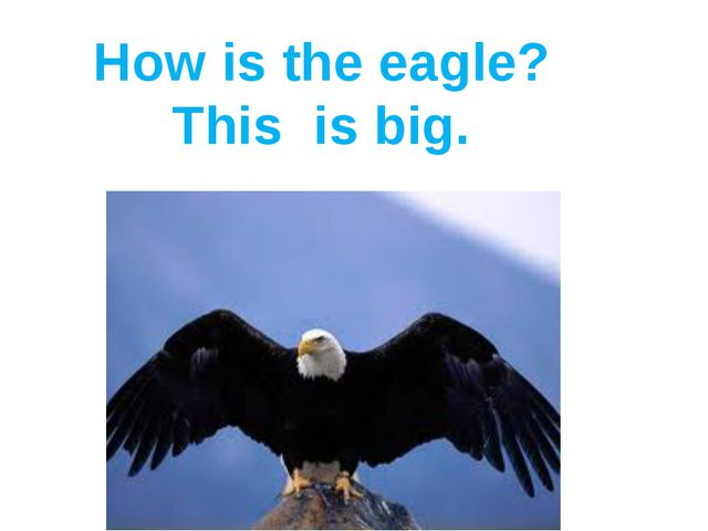 How is the eagle? This is big.