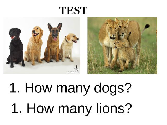 TEST 1. How many dogs? 1. How many lions?