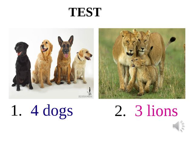 TEST 1. 4 dogs 2. 3 lions
