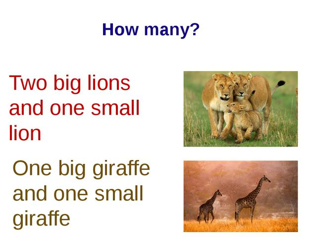 Two big lions and one small lion One big giraffe and one small giraffe How ma...