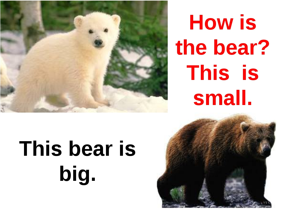 How is the bear? This is small. This bear is big.