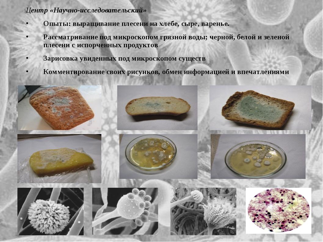 Центр «Научно-исследовательский» Опыты: выращивание плесени на хлебе, сыре, в...