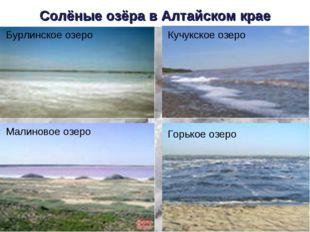 Солёные озёра в Алтайском крае Бурлинское озеро Кучукское озеро Малиновое озе