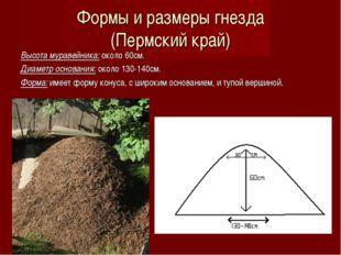 Формы и размеры гнезда (Пермский край) Высота муравейника: около 60см. Диамет