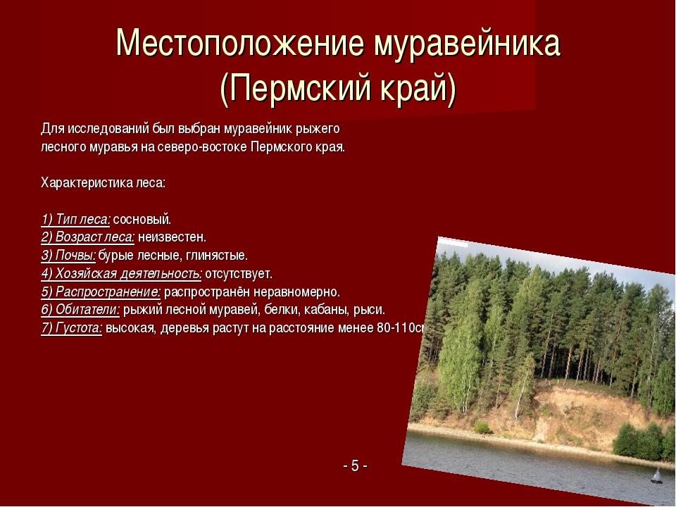 Местоположение муравейника (Пермский край) Для исследований был выбран мураве...