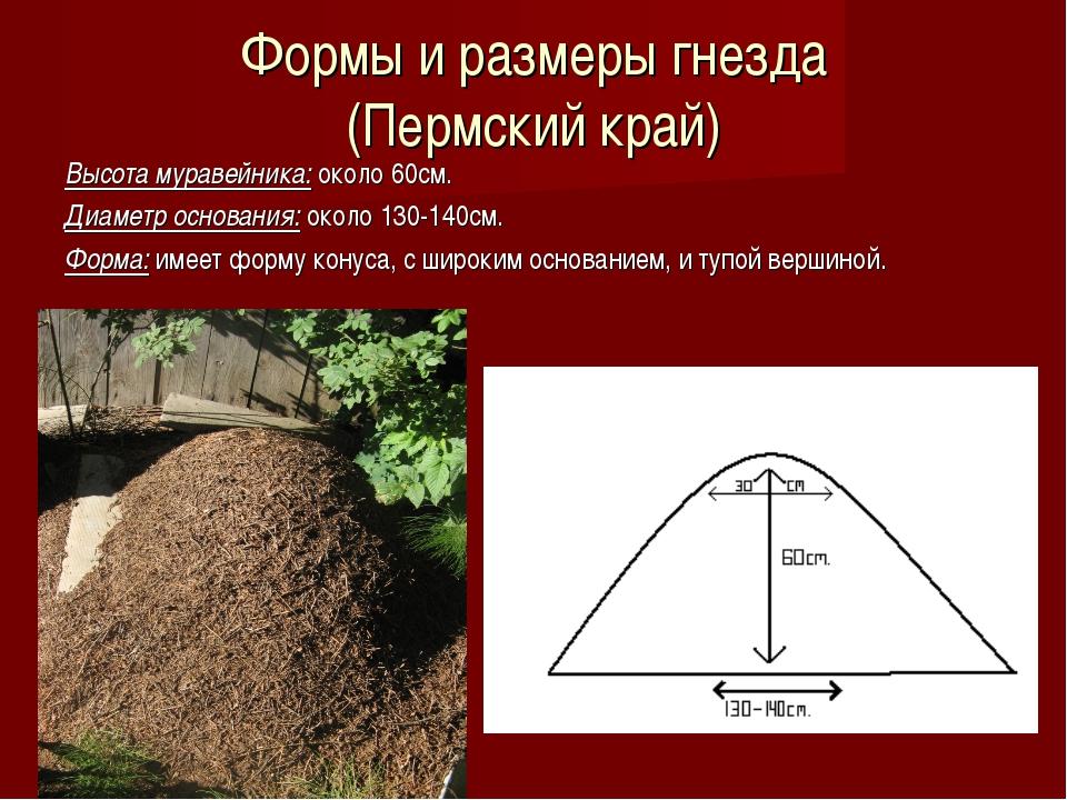 Формы и размеры гнезда (Пермский край) Высота муравейника: около 60см. Диамет...