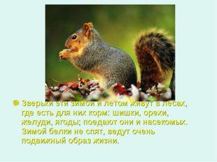 Зверьки эти зимой и летом живут в лесах, где есть для них корм: шишки, орехи