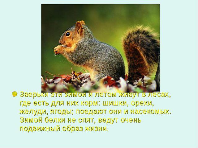 Зверьки эти зимой и летом живут в лесах, где есть для них корм: шишки, орехи...