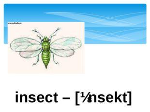 insect – [ɪnsekt]
