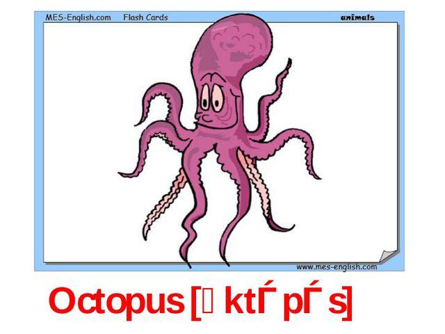 Octopus [ᴐktǝpǝs]