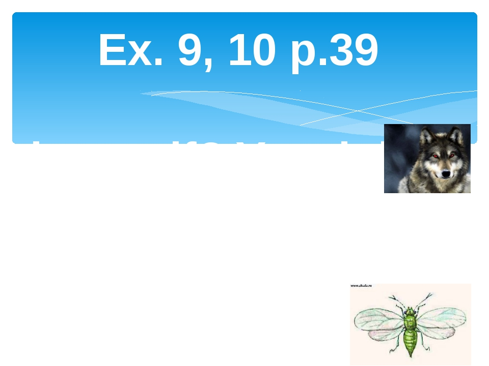 Ex. 9, 10 p.39 Is it a wolf? Yes, it is. Is it an ant? No, it is not. isn't