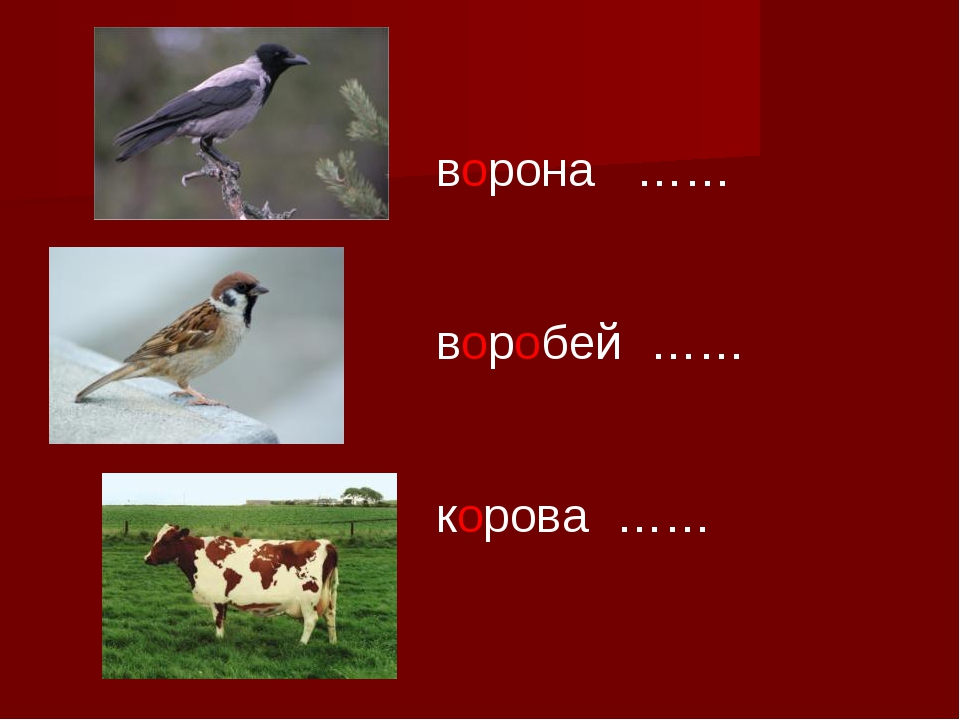 ворона …… воробей …… корова ……