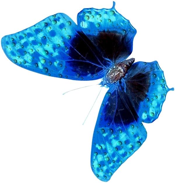 бабочка.jpeg