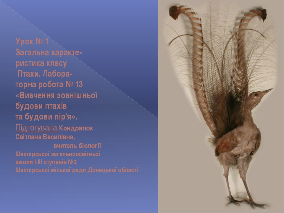 Урок № 1 Загальна характе- ристика класу Птахи. Лабора- торна робота № 13 «Ви...