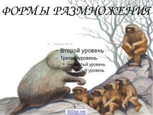 ФОРМЫ РАЗМНОЖЕНИЯ 900igr.net