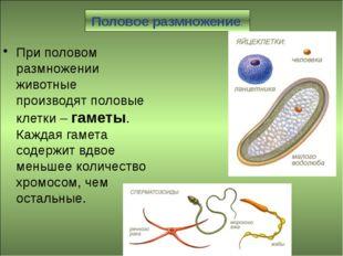 Половое размножение. При половом размножении животные производят половые кле