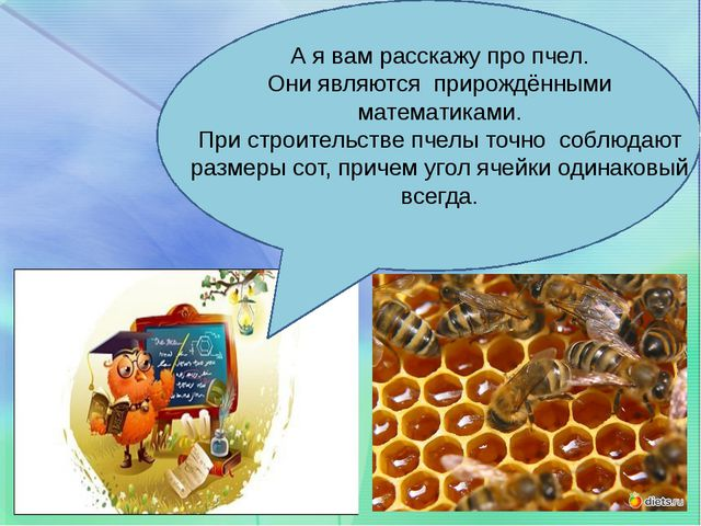 А я вам расскажу про пчел. Они являются прирождёнными математиками. При стро...