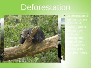 Deforestation Deforestationis the destruction of forested lands. Forests are