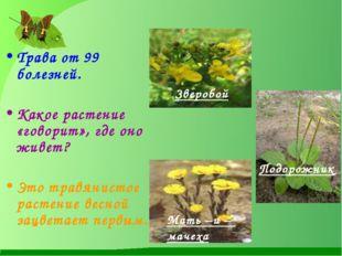 Трава от 99 болезней.  Какое растение «говорит», где оно живет? Это травянис